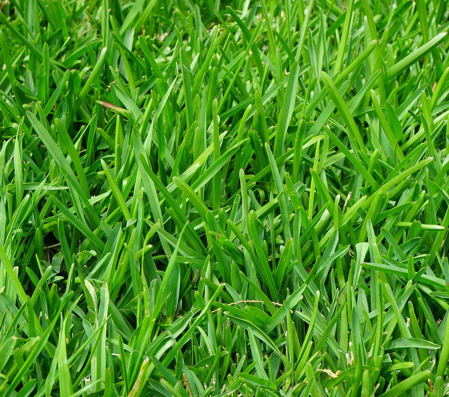 Faire tondre sa pelouse dans le 95 (Val d'Oise)